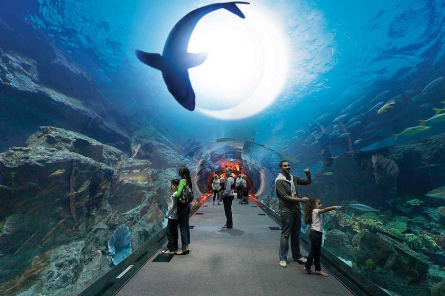 Океанариум Dubai Aquarium представляет первый в мире аттракцион «Неделя акул с каналом Discovery»