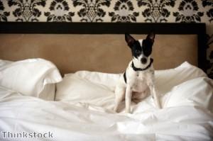 فندق فاخر للحيوانات الأليفة فقط في دبي