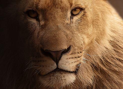 Dubai Safari mega zoo prepares to roar into action