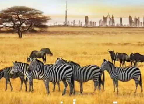 A screenshot from the Dubai Safari video.