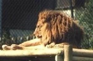 Expansion underway at Dubai Zoo
